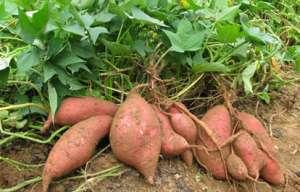 山区农民找到发展新模式 种植高山蔬菜有致富订单
